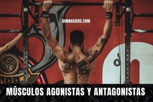 Músculos agonistas y antagonistas: Qué son y ejemplos